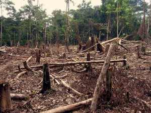 deforestation_in_the_amazon.jpg.662x0_q70_crop-scale